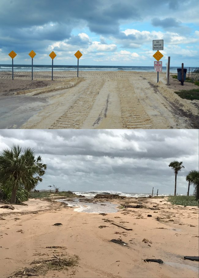 Before and after: Nothing so dramatically illustrates the power of Hurricane Irma's storm surge on Flagler's shore than how it remade Malacompra Park in the Hammock. The top picture above was taken last Thursday, Sept. 7, just after county public work crews had dumped loads of sand to form a protective berm against the anticipated surge, at the point where the road ends and the beach begins. Below, this morning, the berm was gone, so was a lot more. (c FlaglerLive)