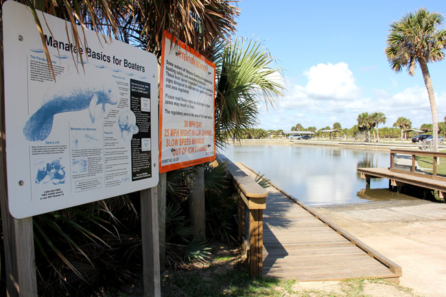manatees gamble rogers state park
