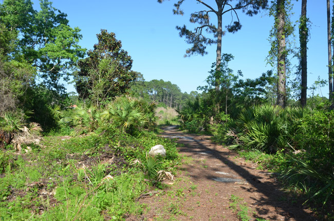 This way to what used to be the Matanzas Golf Course. (© FlaglerLive)