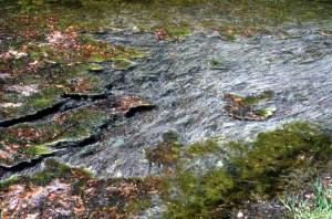 The Matanzas River at Washington Oaks State Park. (State Archives of Florida, Florida Memory)