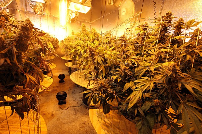 A medical marijuana growing facility in Oakland, Calif. (Rusty Blazenhoff)