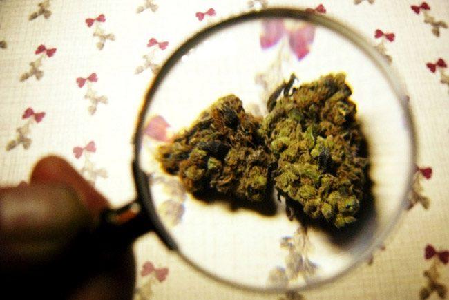 florida legislature special session medical marijuana