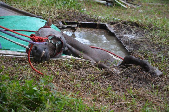 mercy horse rescue