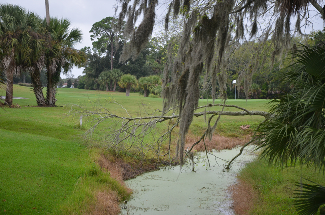 Authorities made a curious discovery in the woods within Palm Harbor Golf Club late Thursday afternoon. (© FlaglerLive)