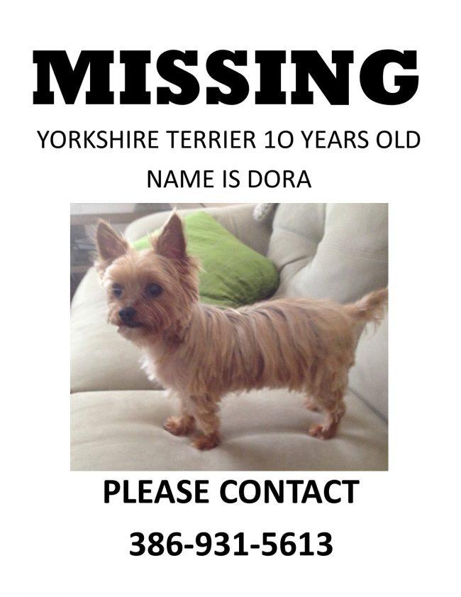 missing dog dora