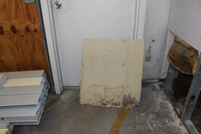 Mold in the corner of the northeast wall. Click on the image for larger view.
