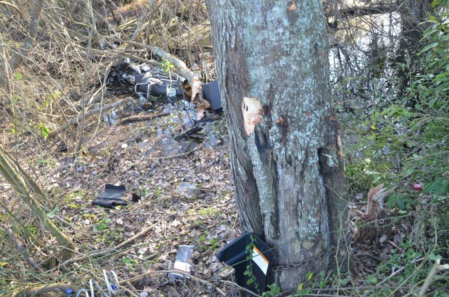 The motorcycle struck two trees, ripping the smaller tree, to the right, from just above its roots and taking it with it into the water, while leaving a gash on the larger tree. The chain visible at the foot of the larger tree was not there at the time of the wreck. It was placed there by the wrecker moments before the motorcycle was retrieved. Click on the image for larger view. (© FlaglerLive)