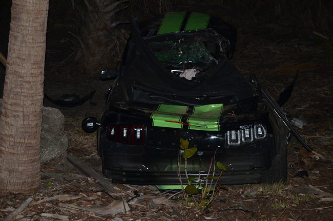The mustang traveled several hundred feet off the road, taking out a palm tree along the way, before coming to rest at the foot of other trees. (c FlaglerLive)