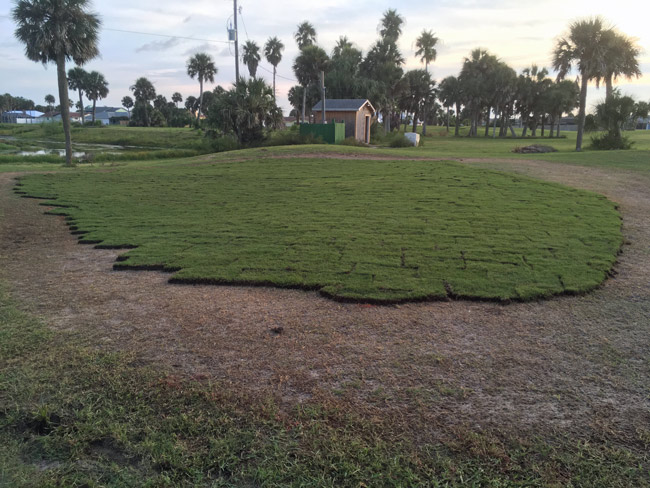 New sod at the old Ocean Palms Golf Course, the latest attempt to bring the nine-hole golf course into compliance with its lease with the city. 'The golf course has never looked so good,' according to Flagfler Beach City Commission Chairman Rick Belhumeur, who only last month was ready to end the lease with the management company. (© FlaglerLive)