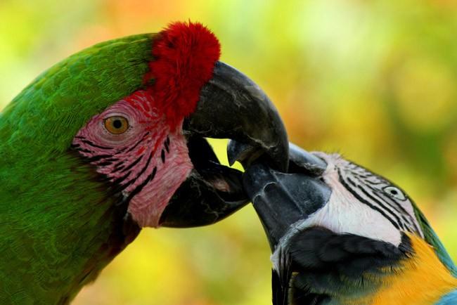 palm coast birding