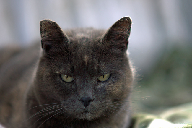 There are less lethal alternatives to Palm Coast's feral cat problem. (Michael Newton)