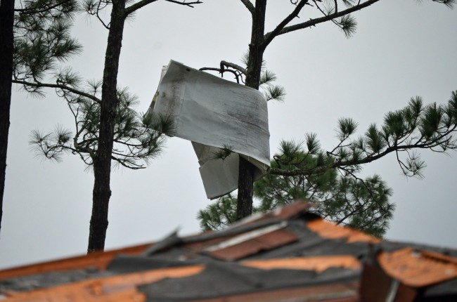 A chunk of siding ended up wrapped high on a tree. Click on the image for larger view. (© FlaglerLive)