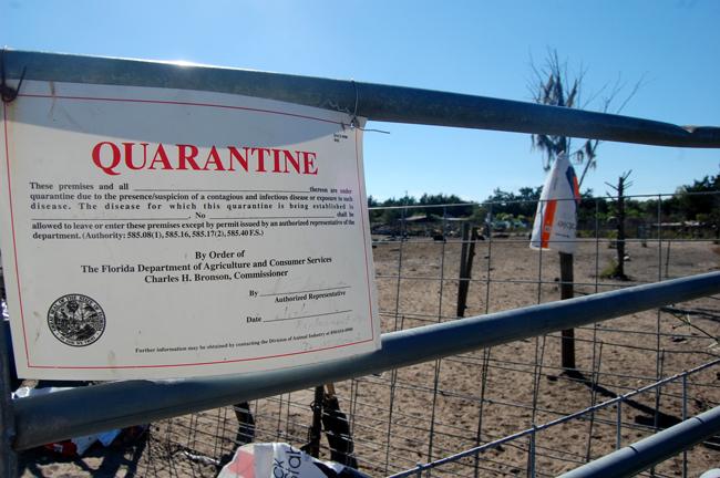 pig sanctuary bunnell quarantine lory yazurlo public health