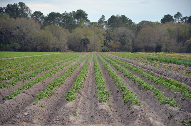 flagler county soil and water conservation board