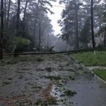 A new law pushing for more underground power lines, which received overwhelming support in the Legislature, came after storms such as Hurricane Irma and Hurricane Michael knocked out power for millions of Floridians. (NSF)
