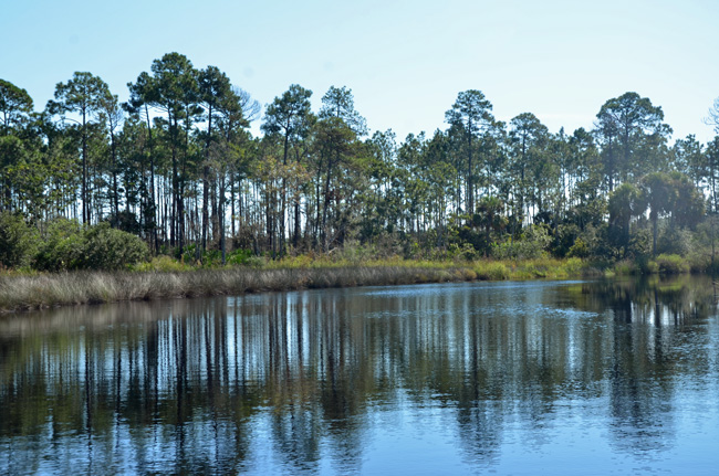 The cottages are coming: The Princess Place Preserve along Pellicer Creek. (© FlaglerLive)
