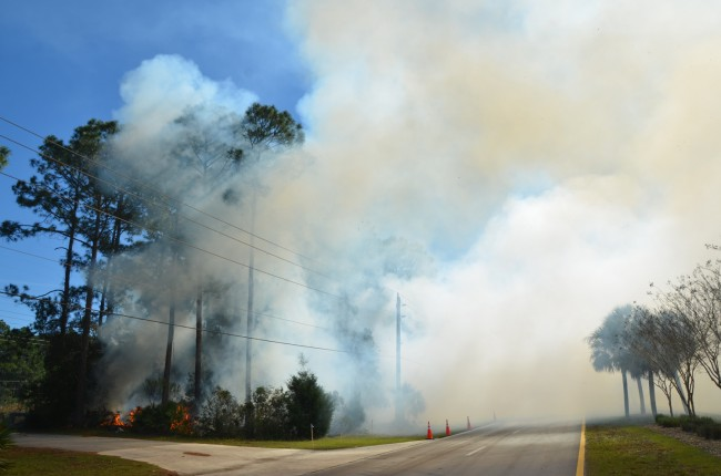 Thick smoke wating across both directions of Seminole Woods Boulevard prompted a closure of the road for half a mile south to Utah Place. Click on the image for larger view. (© FlaglerLive)