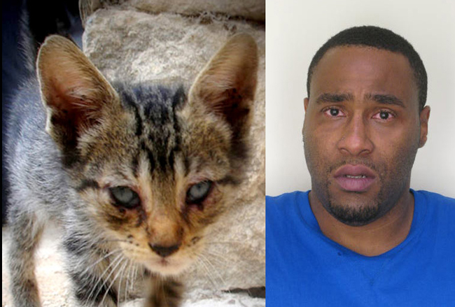 Christopher Brooks was drunk at the wheel of his car when he drove his friend's sick cat (not the one pictured) to a vet, and was arrested for DUI. He may face up to five years in prison.