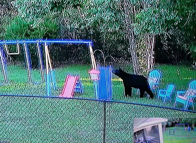 A video still of the bear from Richie Maher posted on the Seminole Woods Neighborhood Watch Facebook page on June 10.