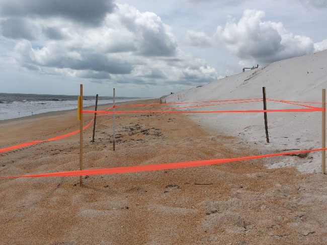 Did you know? Construction activities do not start each day until Turtle Patrol volunteers search for new sea turtle nests.  When nests are found, an extra 10-foot buffer is staked and construction activities cannot occur within that buffer.  Flagler Beach is having a particularly busy nesting season this year with more than 100 nests detected. (FDOT)