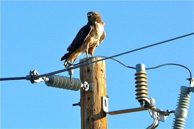 A utility company lobbyist scopes out a client's power. (Larry & Teddy Page)
