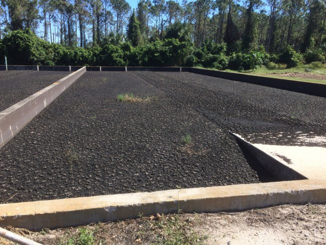 After the waste goes into a large containment cylinder for separation, it is laid out in drying beds... (© FlaglerLive)