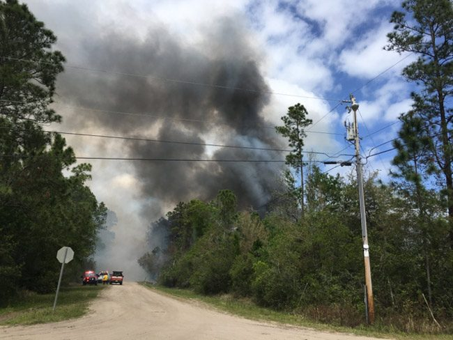 flagler wildfires