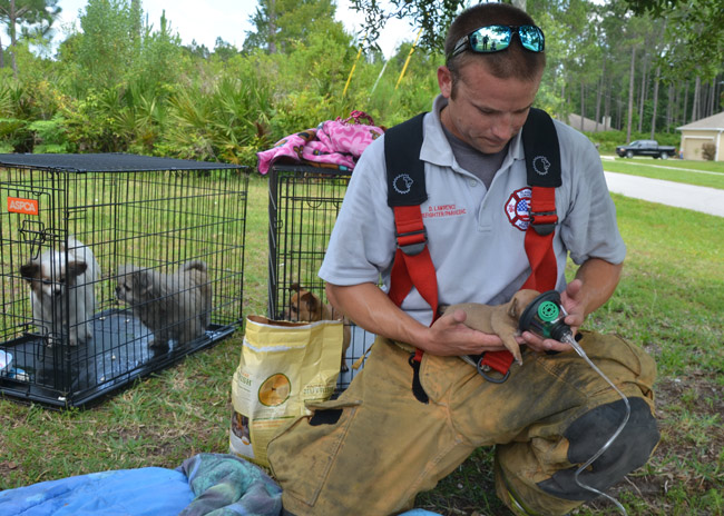 llach court fire palm coast dog rescue