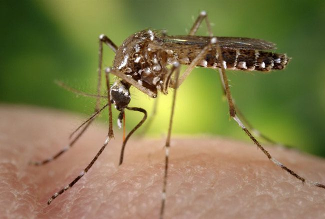 zika virus infections florida miami dade